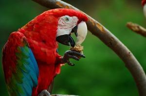 parrot-855493_1920