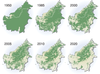 deforestación borneo.png